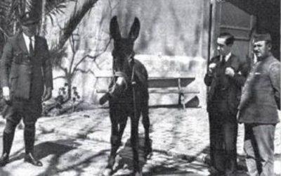 En Barcelona un burro preso